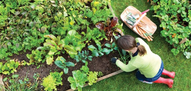 vegetable-garden-ideas copy